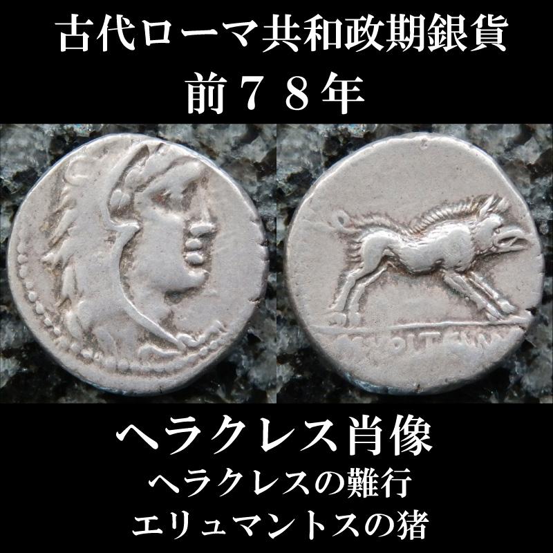 古代ローマコイン 共和政期 前78年 マルクス・ウォルテイウス デナリウス銀貨 ヘラクレス肖像 ヘラクレスの12の難行、エリュマントスの猪